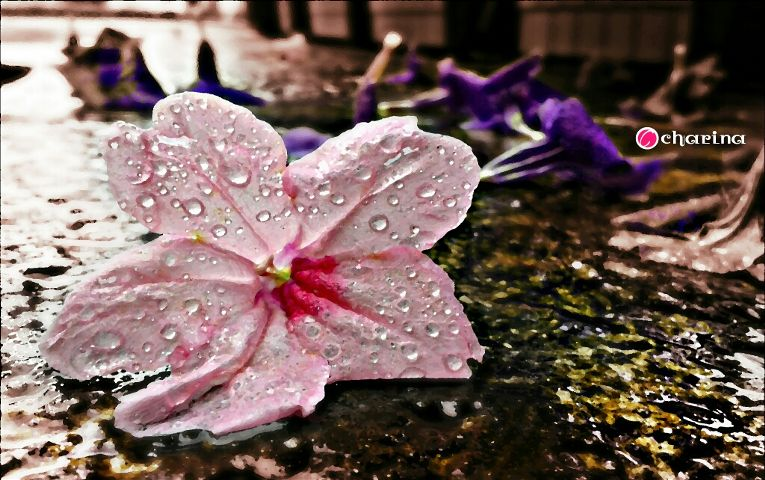 photography,flower,weather,emotion,drops