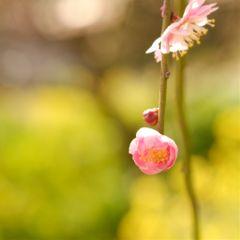 cute flower japan winter spring