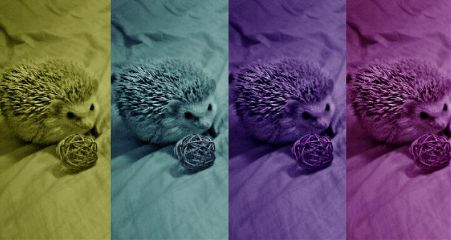 pets & animals photography love cute hedgehogs