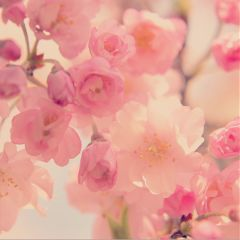 flower photography nature japan spring