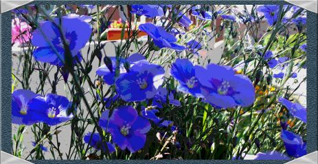 flower nature colorful color splash