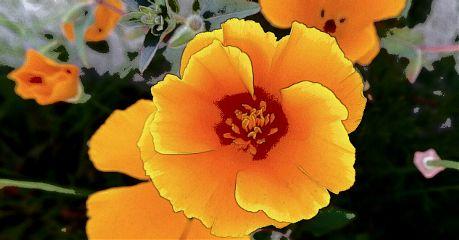 flower nature color splash
