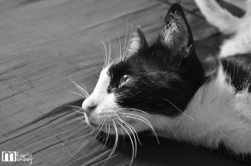black & white pets & animals photography