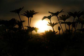 beautiful flower summer sun