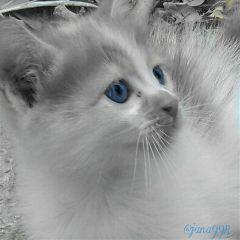 cat color splash photography pets & animals black & white