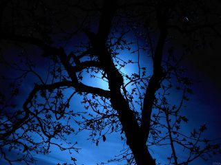 moon night tree moonlight stars