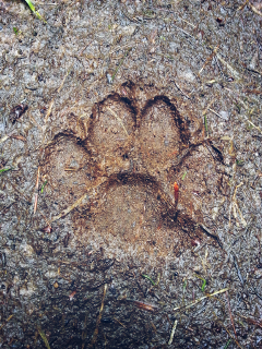 dog paw print mudd