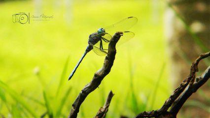 photography nature macro