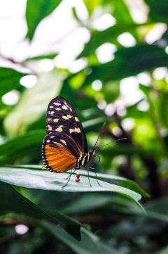 bodensee butterfly petsandanimals