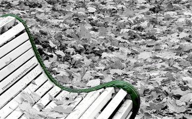 oldphoto blackandwhite fall