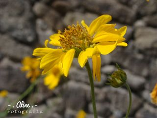 cute nature photography vintage flower
