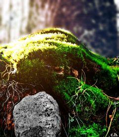 nature photography colorful blur closeup