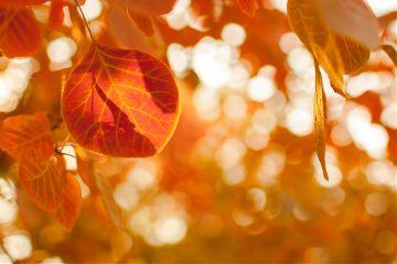 colorful autumn leaves bokeh nature