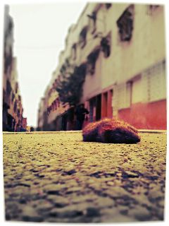 mouse travel petsandanimals photography dead