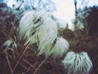 nature vintage flower winter