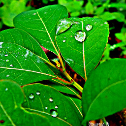 nature rain dews macro photography