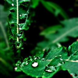 nature rain dews photography night