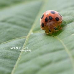 macro petsandanimals nature photography wapgreen
